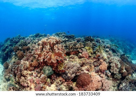 Sunrays over a shallow water, tropical coral reef - stock photo
