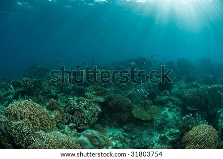 Sunrays over general reef scene, Indonesia