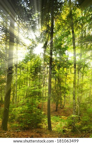 Sunrays streaking through a forest of large trees at Little Green Pond near Saranac Lake, New York, USA - stock photo