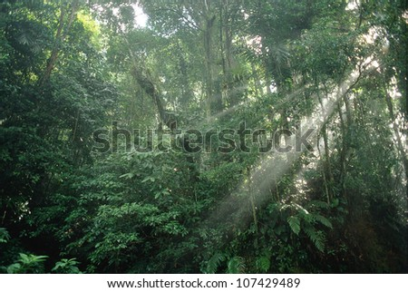 Sunrays through the thick rainforest foliage, Asa Wright Nature Centre, Trinidad, Trinidad and Tobago, West Indies - stock photo