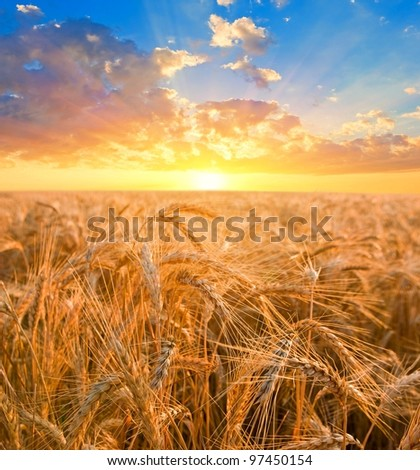 sunrise among a wheat fields