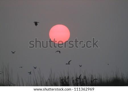 Sunrise and Birds - stock photo