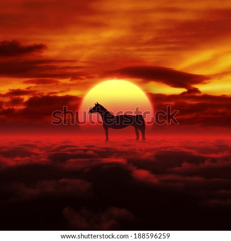 Sunrise and horse