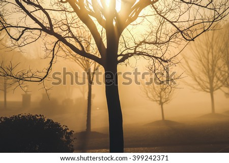 Sunrise and leafless tree - stock photo