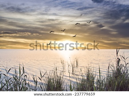 sunrise at sea from the shore of plants - stock photo