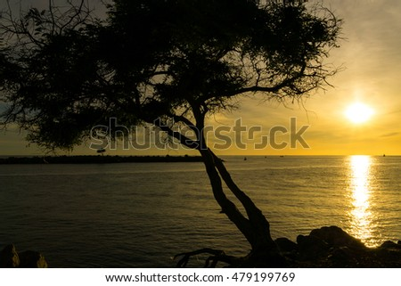 sunrise at sea with silhouette of tree
