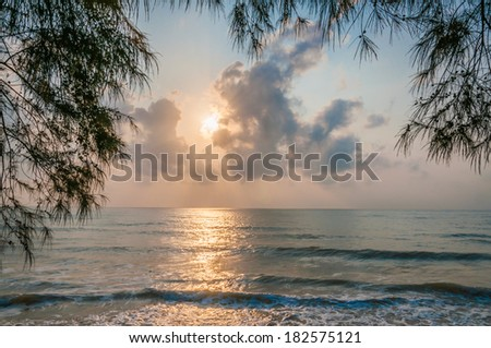 sunrise at the beach, branch at foreground.