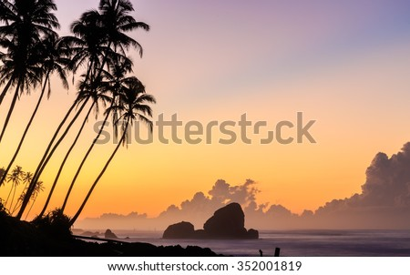 Sunrise at the beach with palm trees in Sri Lanka