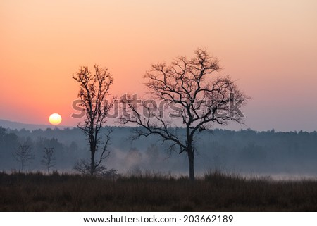 Sunrise at the Kanha Tiger Reserve in north central India. - stock photo