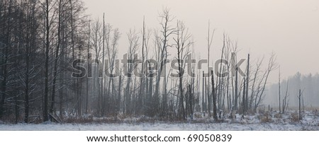 Sunrise before landscape with riparian forest stand in winter with some dead tree