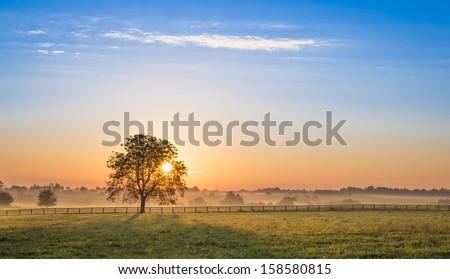 Sunrise Behind a Tree - stock photo