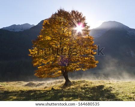 Sunrise behind Tree - stock photo