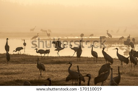 Sunrise. Cranes, flight, valley, Hula, Israel