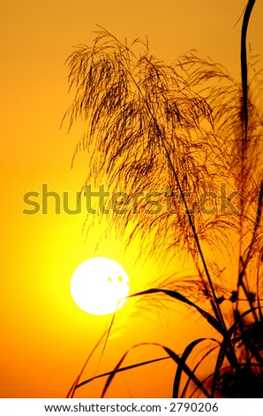 Sunrise. Exposed background. Thailand. - stock photo