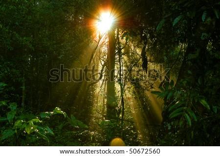 Sunrise Fog, khao yai national park Thailand - stock photo