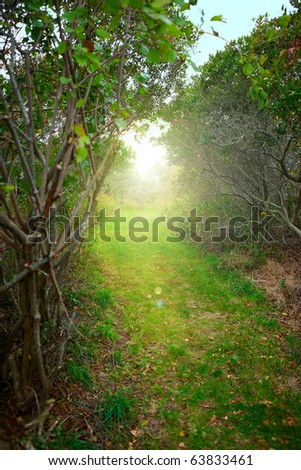 Sunrise forest path and fog