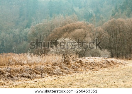 Sunrise frozen landscape with meadow, trees and forest - stock photo