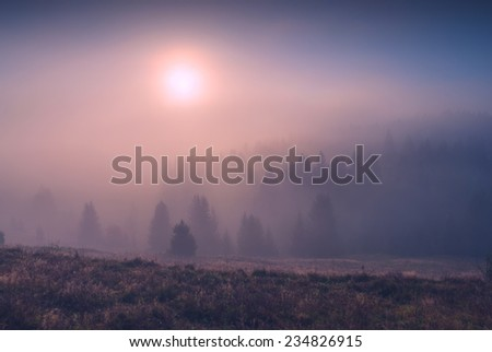 Sunrise in a Carpathian mountain foggy valley with beautiful golden sunlight