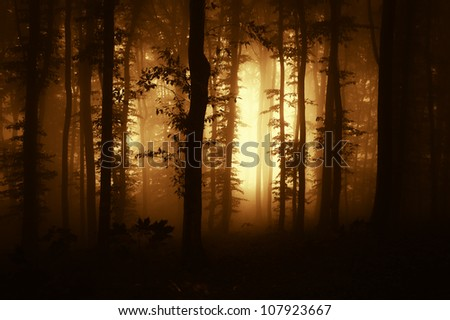 sunrise in a dark forest