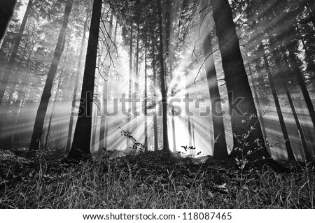 sunrise in a forest - stock photo