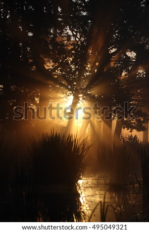 sunrise in a forest