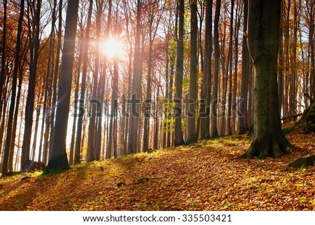 Sunrise in autumn forest