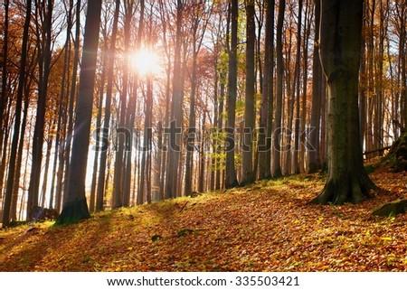 Sunrise in autumn forest - stock photo