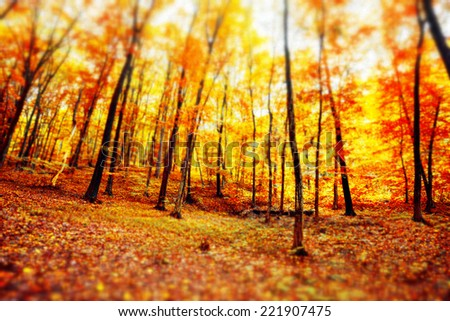 Sunrise in autumn forest. Tilt-shift lens use. - stock photo