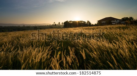 Sunrise in grass field with clear sky - stock photo