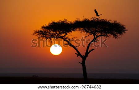 Sunrise in Kenya's Masai Mara Reserve - stock photo