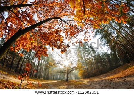 Sunrise in the autumn forest captures with a fish-eye lens - stock photo