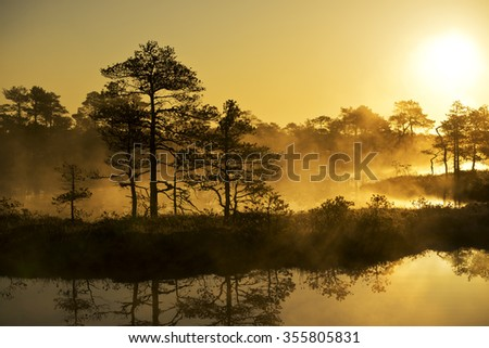 Sunrise in the bog, golden marsh, lakes and nature - stock photo