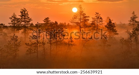 Sunrise in the bog - panoramic photo of Estonian nature. - stock photo