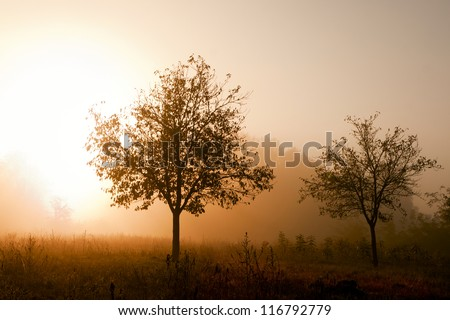 Sunrise in the foggy forest. - stock photo