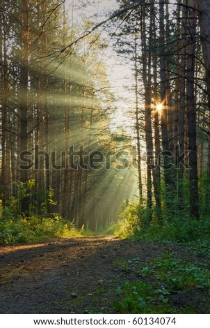 sunrise in the foggy forest - stock photo