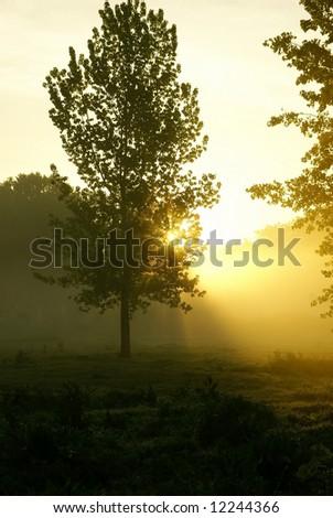 Sunrise in the foggy morning - stock photo