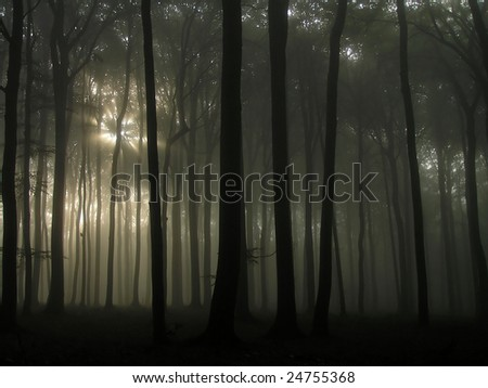 Sunrise in the forest. - stock photo