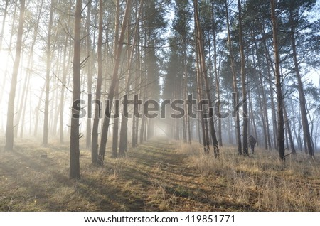 Sunrise in the forest - stock photo