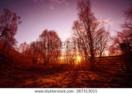 Sunrise in the forest at Lynwilg,  in the Scottish Highlands, UK. Added grain and colour styling. - stock photo