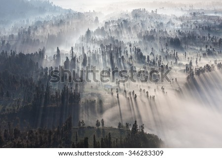 Sunrise in the forest near Bromo volcano, Java island, Indonesia - stock photo