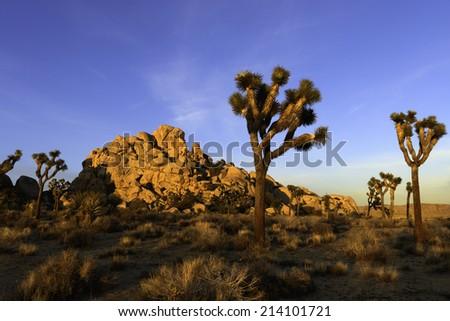 Sunrise in the Joshua Tree national Park - stock photo
