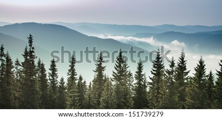 sunrise in the mountains, pine trees at the background - stock photo