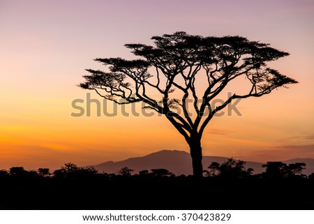 Sunrise in the Serengeti, Tanzania - stock photo