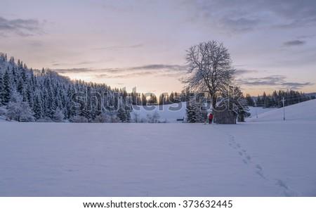 Sunrise in the winter forest in Slovenia. - stock photo