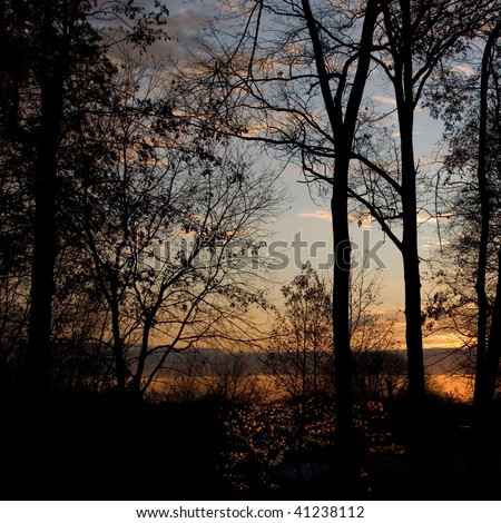 Sunrise in the woods - Details in the leaves in the foreground lit up by the sun-rays, clearly visible. - stock photo