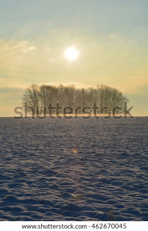 Sunrise in winter with trees, snow  and fog