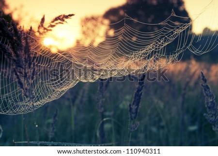 sunrise light - stock photo
