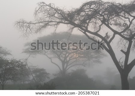 Sunrise on a foggy foggy morning in Ndutu acacia forest - stock photo