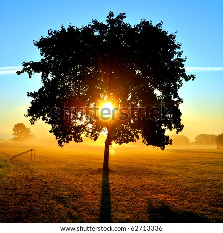Sunrise on a Meadow - stock photo