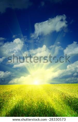sunrise on a wheat field - stock photo